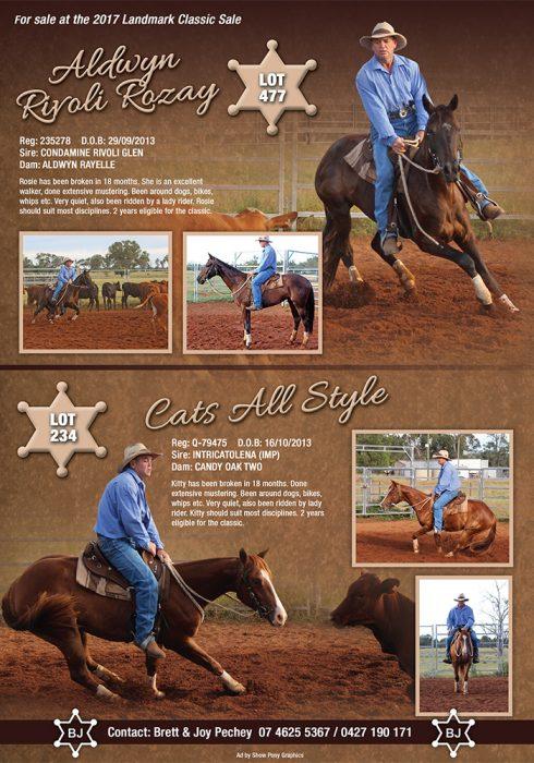 Pechey Sale Horses 2016