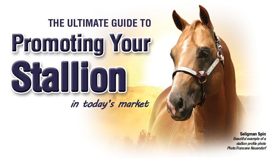 Stallion Marketing Stallion Promotion