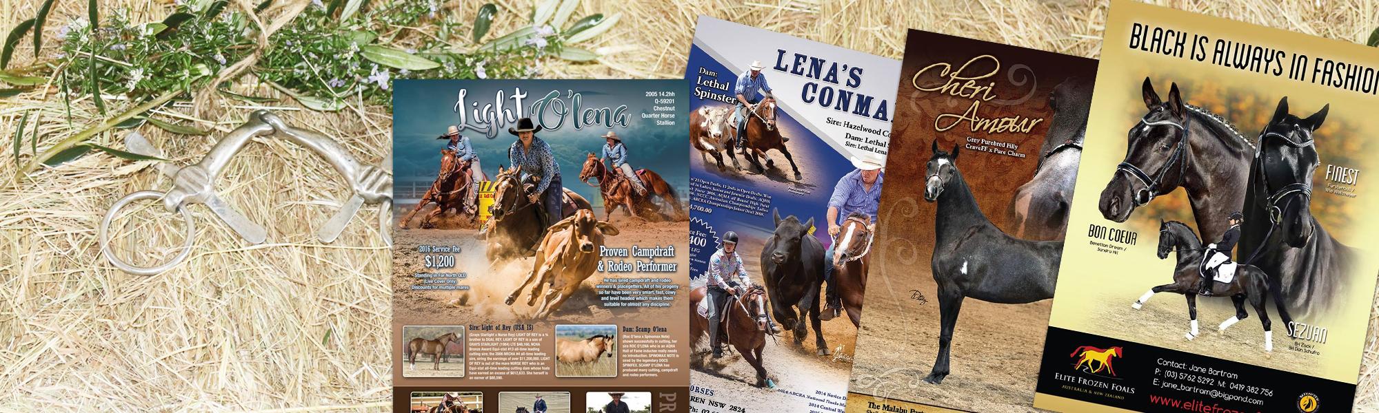 Equine Advertisement Design for magazines, social media or print