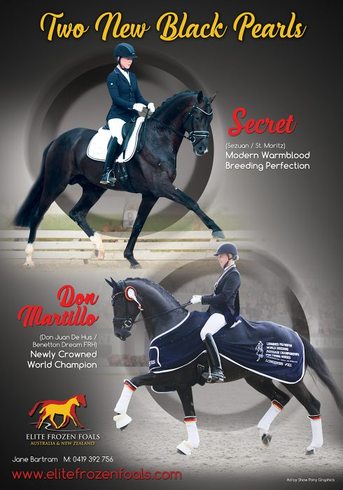 horse deals full page